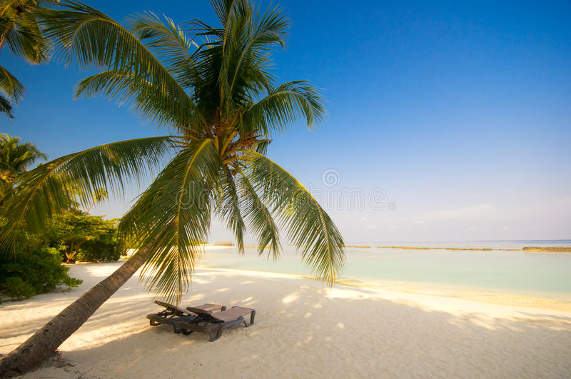 Deck chair under a palm-tree stock images