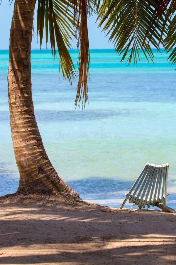 Deckchair pod cieniem drzewko palmowe zdjęcia stock