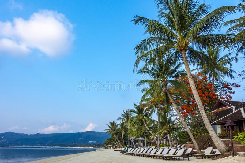 Deckchairs on Chaweng Beach, Ko Samui royalty free stock image