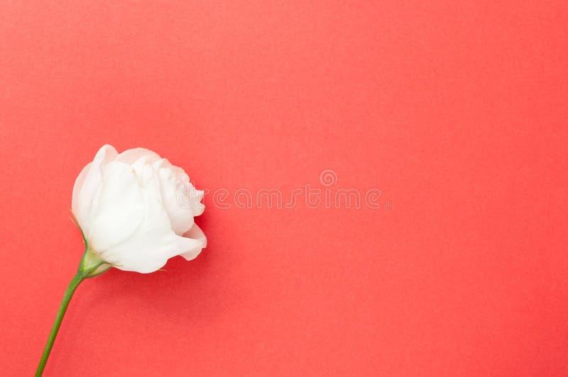 Decken Sie rosafarbene Grußkarte ab lizenzfreie stockfotos