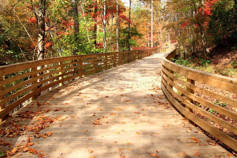 decking ścieżek drewna zdjęcie royalty free