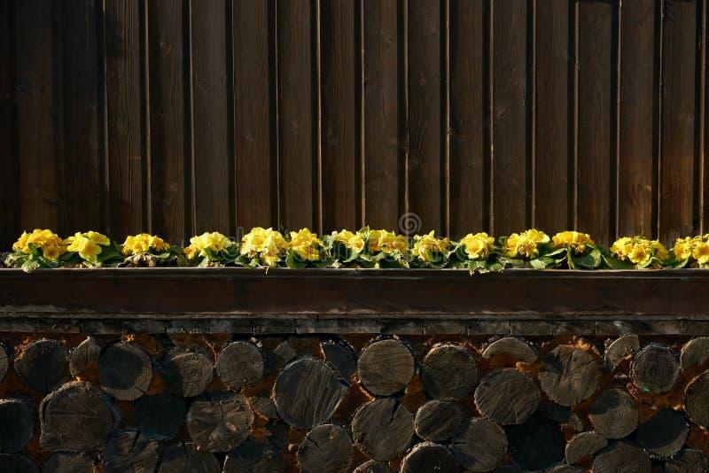 Decking de la madera dura o suelo y planta viejos fotos de archivo libres de regalías