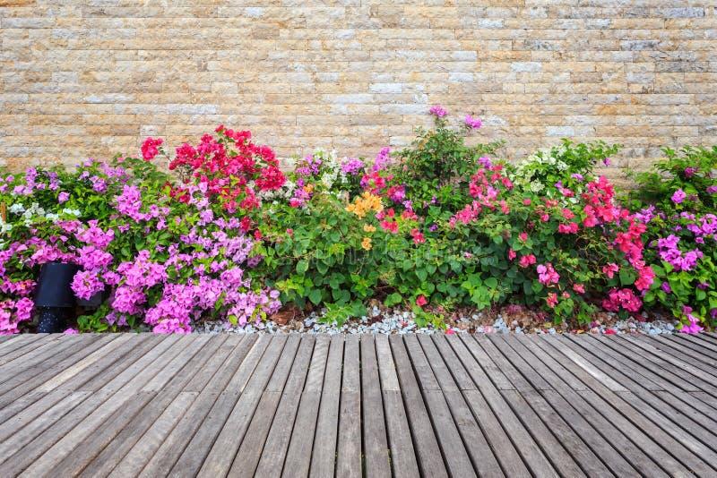 Decking y planta de madera con el jardín de la pared decorativo foto de archivo libre de regalías