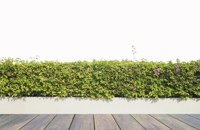 Decking y planta de madera con el jardín de la pared decorativo fotografía de archivo libre de regalías