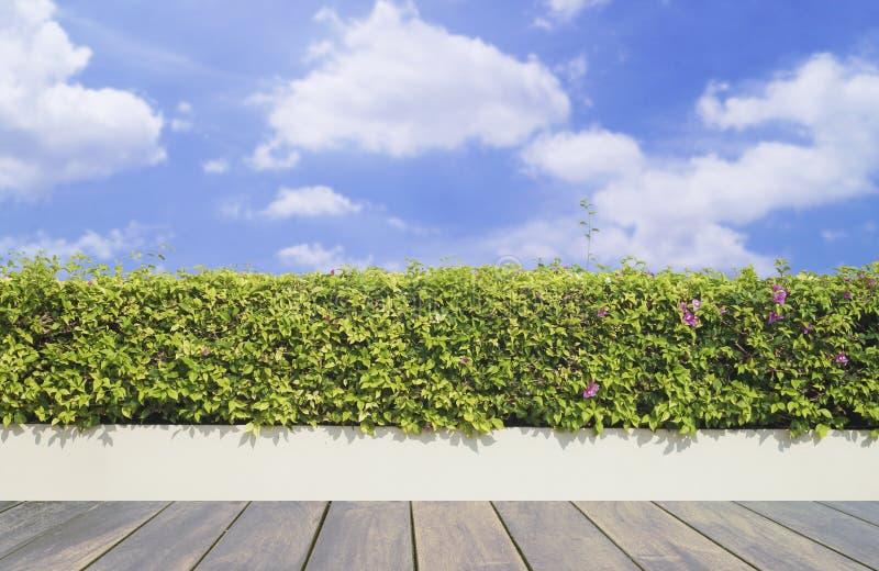 Decking y planta de madera viejos con el jardín de la pared decorativo en el cielo azul imagen de archivo libre de regalías