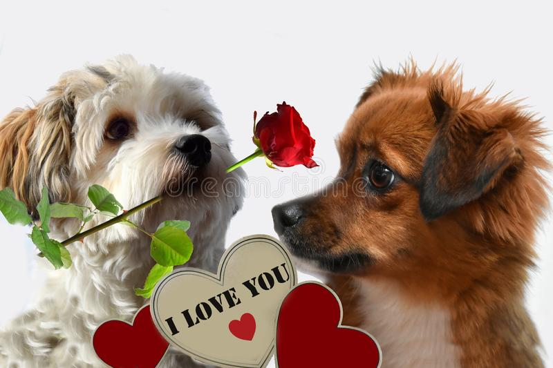 Declaration of love. Love story between two dogs royalty free stock image