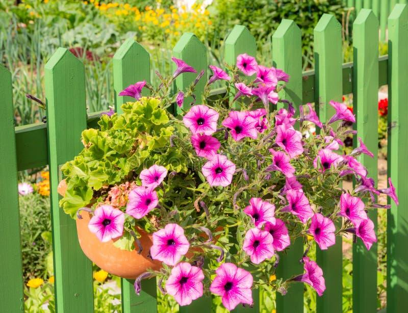 Deco λουλουδιών πετουνιών σε έναν ξύλινο φράκτη στοκ εικόνες