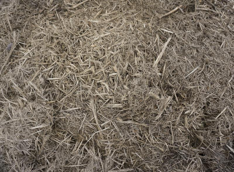 Decomposed the old rotted woodWooden splinters closeup. Decorative wood chips texture. Natural material pattern of yellow wooden p royalty free stock photos