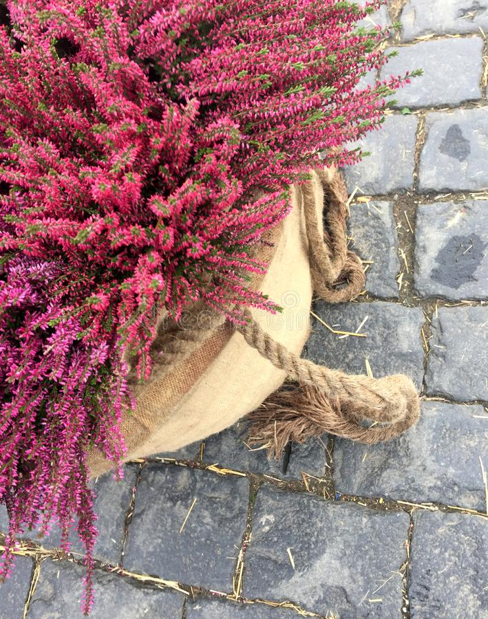 Decor with fall heather flowers in linen bags. royalty free stock image