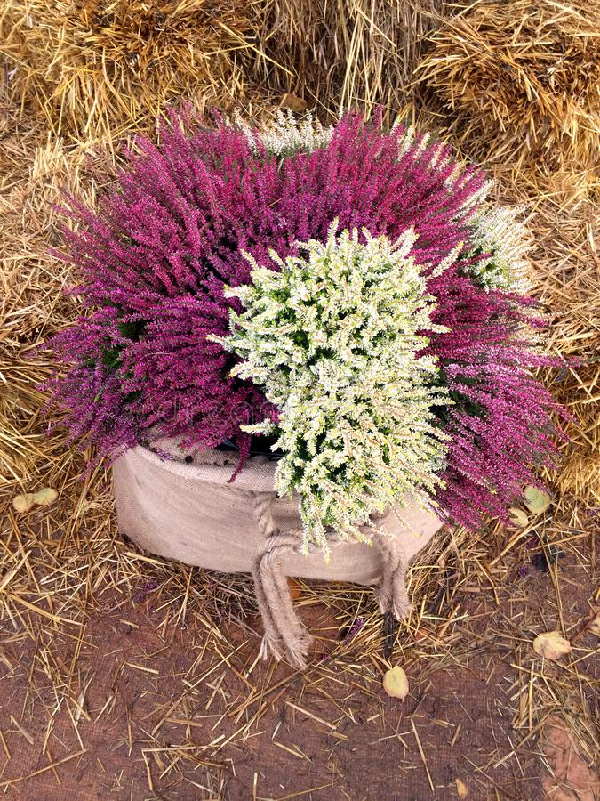 Decor with fall heather flowers in linen bags. stock image