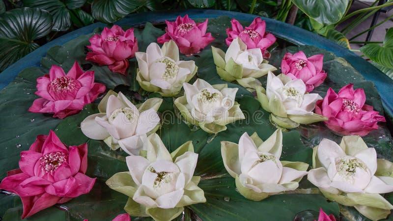 Decoração branca e cor-de-rosa da flor de lótus imagens de stock royalty free