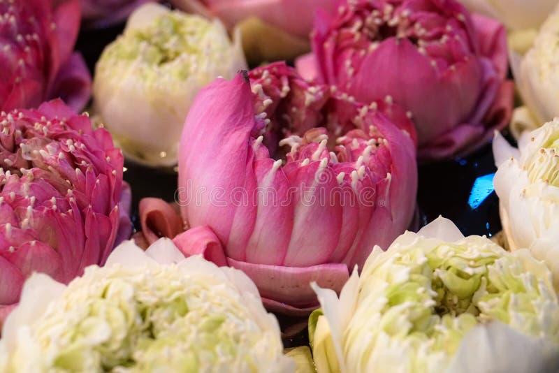 Decoração branca e cor-de-rosa da flor de lótus no hotel fotografia de stock royalty free
