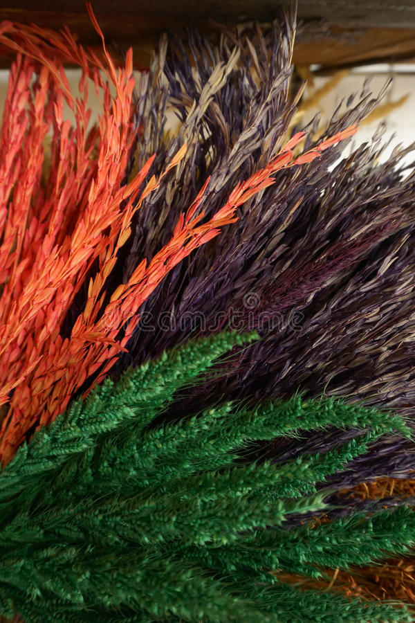 Decoração colorida do trigo imagem de stock