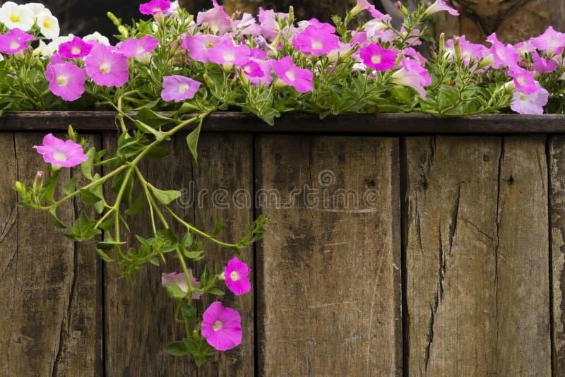 Decoração da flor no jardim fotografia de stock royalty free