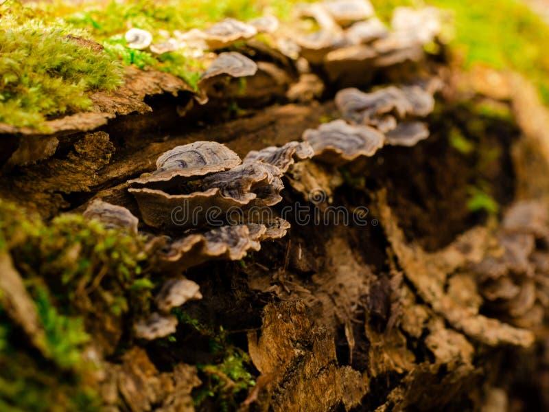 Decoração da floresta por uma árvore caída fotografia de stock royalty free