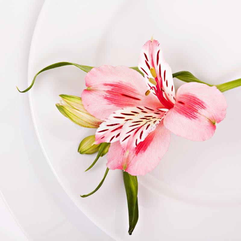 Decoração da mola com alstromeria cor-de-rosa fotos de stock