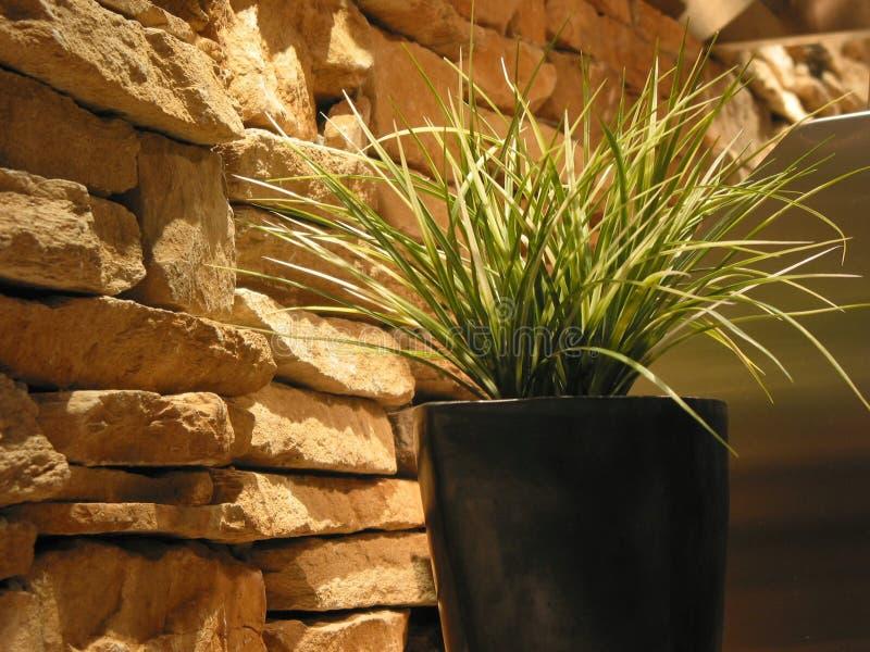 Download Decoração Da Planta Da Grama Imagem de Stock - Imagem de urbano, pedras: 534095