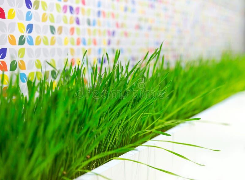 Decoração da planta da grama verde imagem de stock