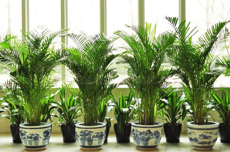 Decoração da planta verde imagens de stock