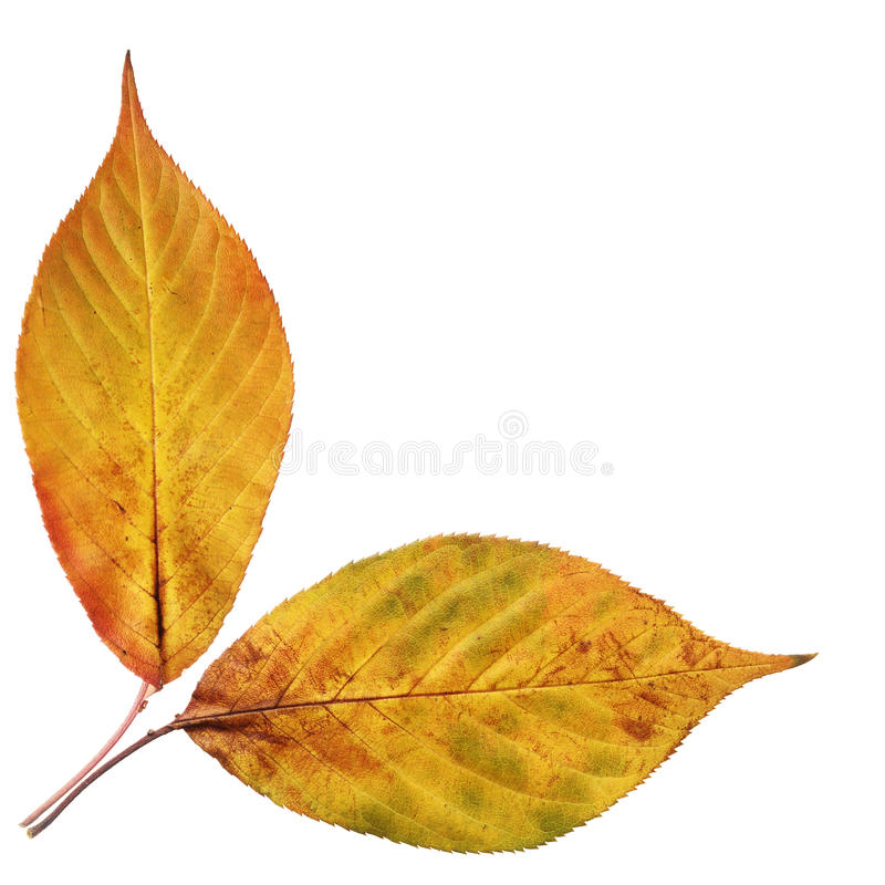 Decoração das folhas de outono fotografia de stock