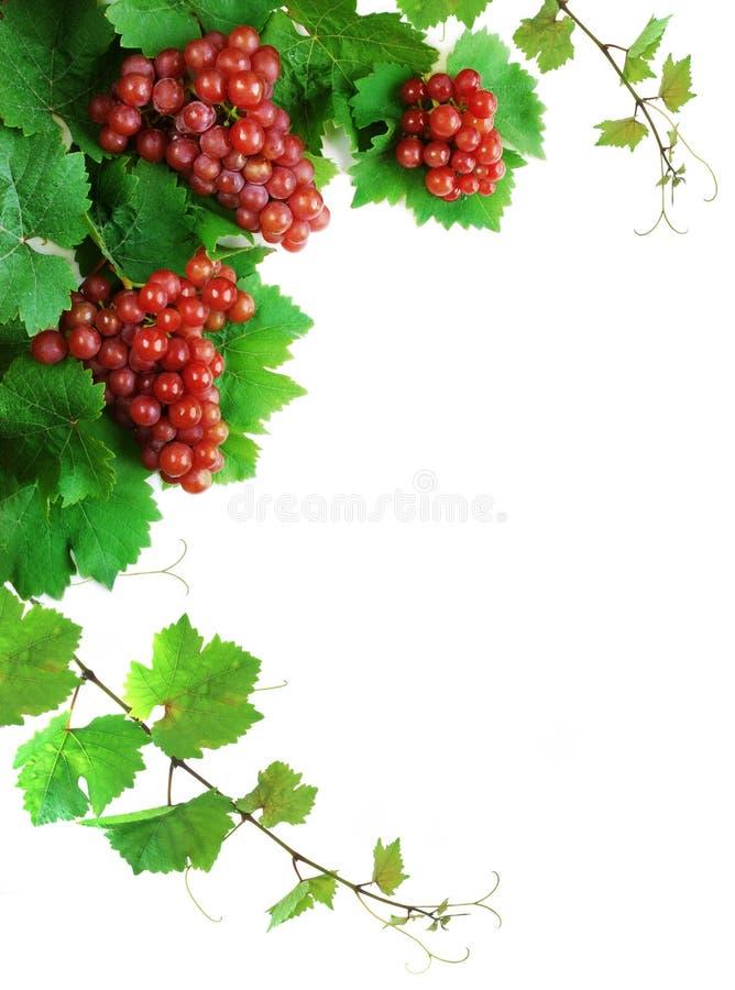 Decoração das uvas para vinho fotografia de stock