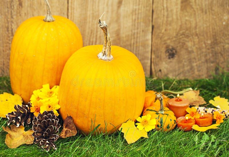 Decoração de Autumn Pumpkin Thanksgiving imagem de stock