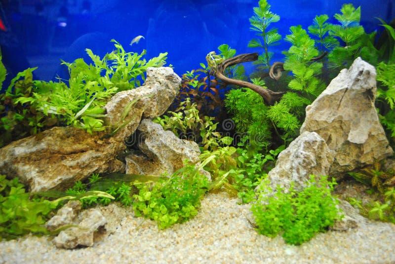 Decoração do aquário fotos de stock royalty free