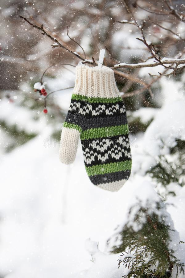 Decoração do inverno com mitene, ramos de árvore com bagas vermelhas fotografia de stock