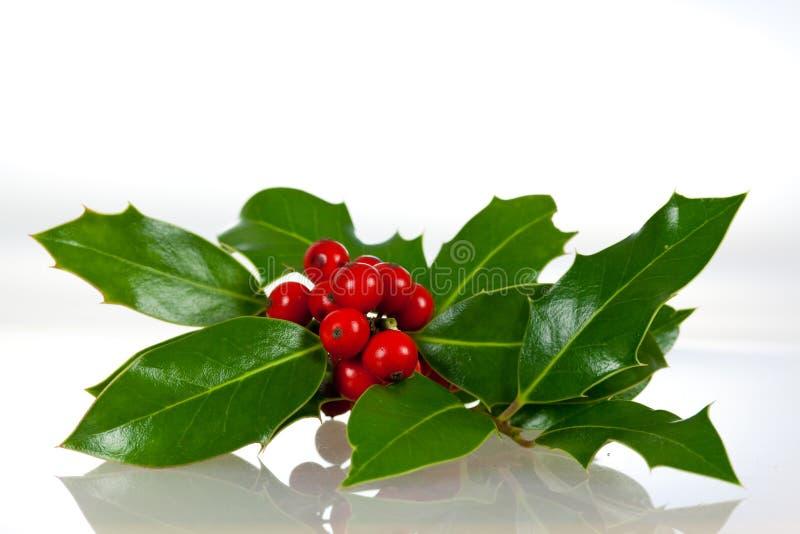 Decoração do Natal com folhas e bagas do azevinho fotografia de stock royalty free