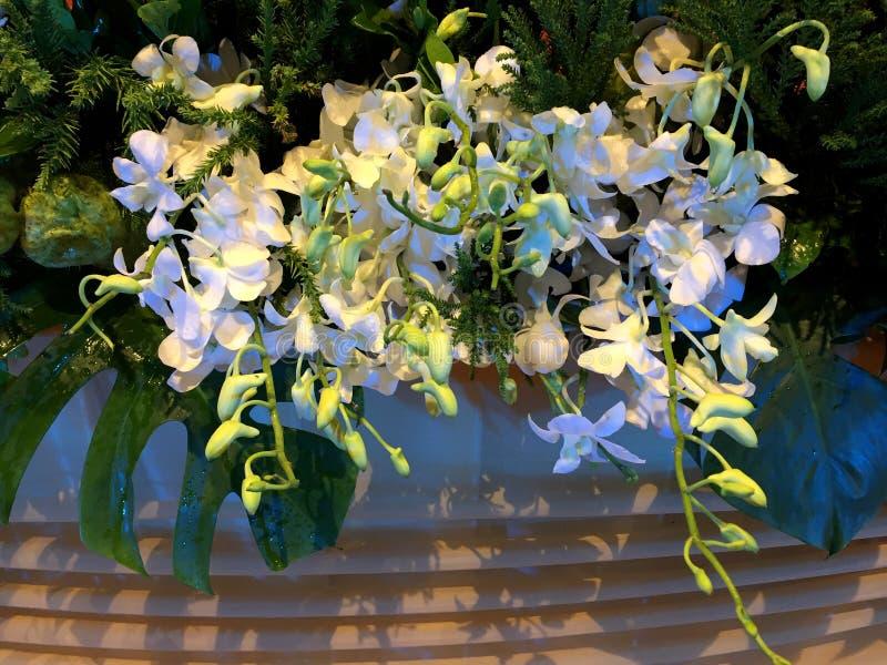 Decoração fresca das flores da orquídea na luz da noite fotografia de stock royalty free
