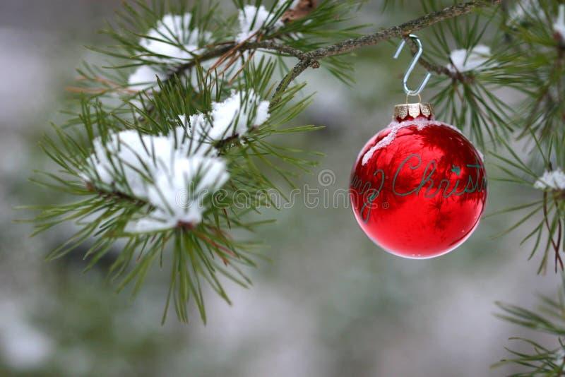 Decoração Vermelha Do Natal Na árvore De Pinho Snow-covered Ao Ar Livre Foto de Stock