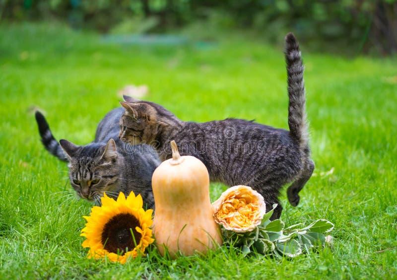 Decorações do gato e do feriado de gato malhado para Dia das Bruxas imagem de stock royalty free