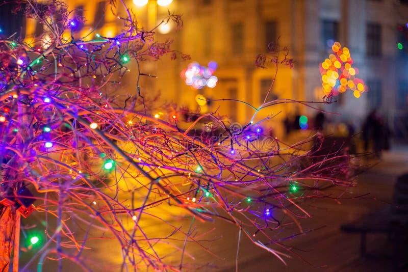 Decorações do inverno na cidade Bulbos, árvores fotografia de stock royalty free