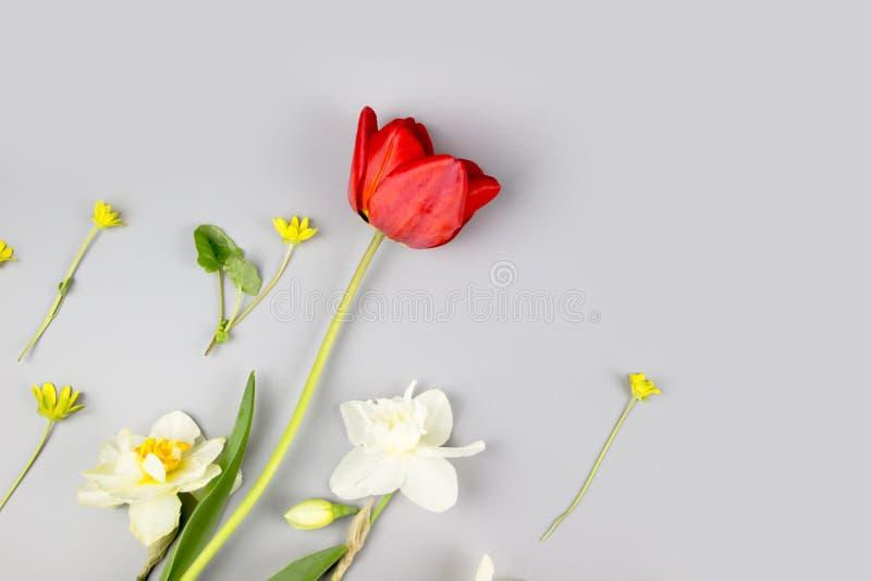 Decora??o do dia das mulheres ou do dia de m?e Quadro de tulipas, do narciso, de jacintos e do muscari vermelhos das flores no br foto de stock royalty free