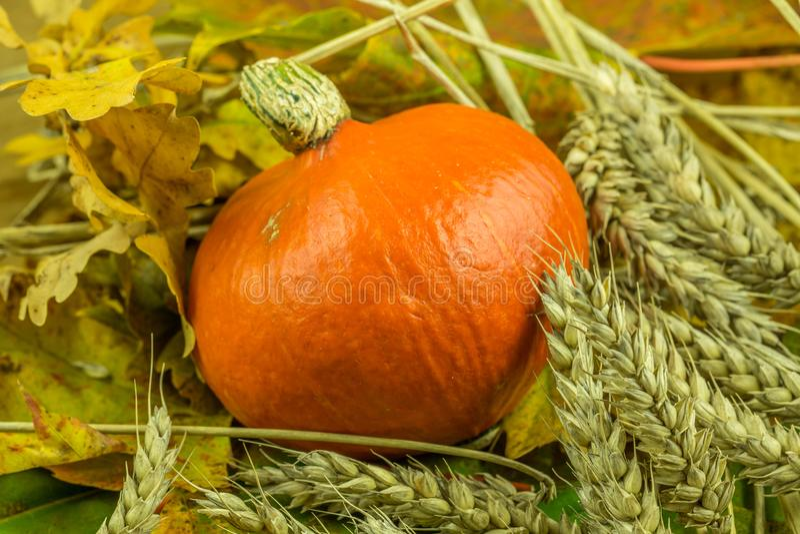 Decoración colorida del otoño con la calabaza fotografía de archivo