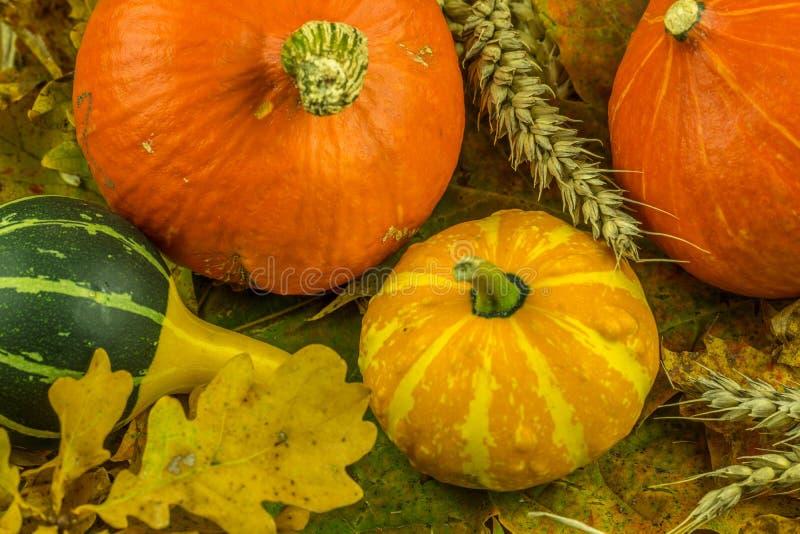 Decoración colorida del otoño con la calabaza imagen de archivo libre de regalías