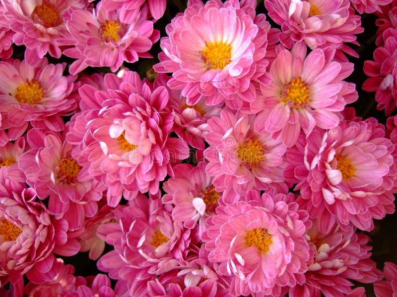 Decoración con las flores encontradas en sepulcro. fotos de archivo