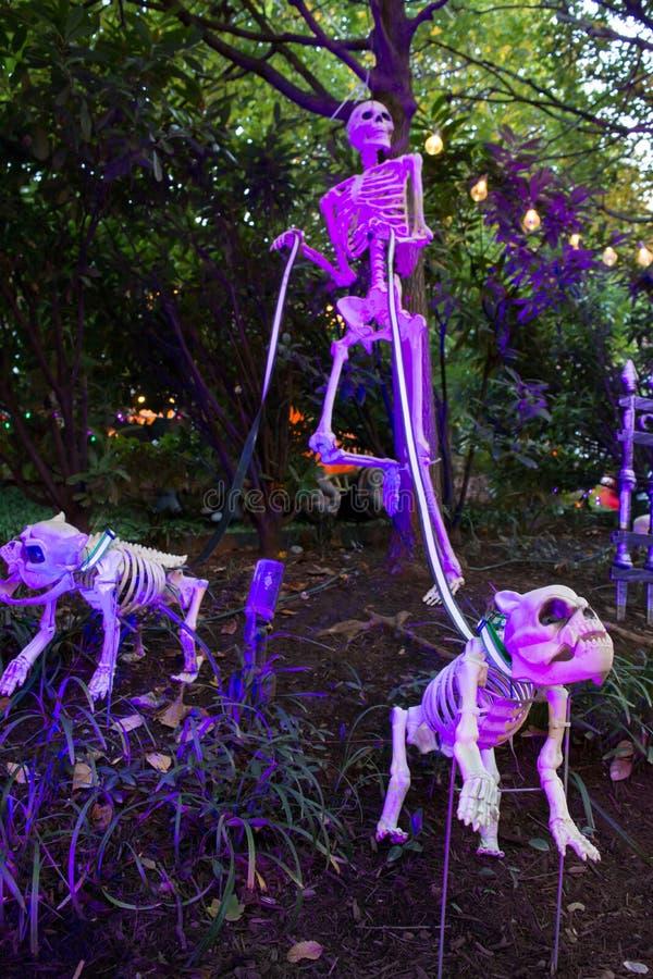 Decoración de Halloween hecha con el esqueleto que trae dos el perro Skeleto imagen de archivo