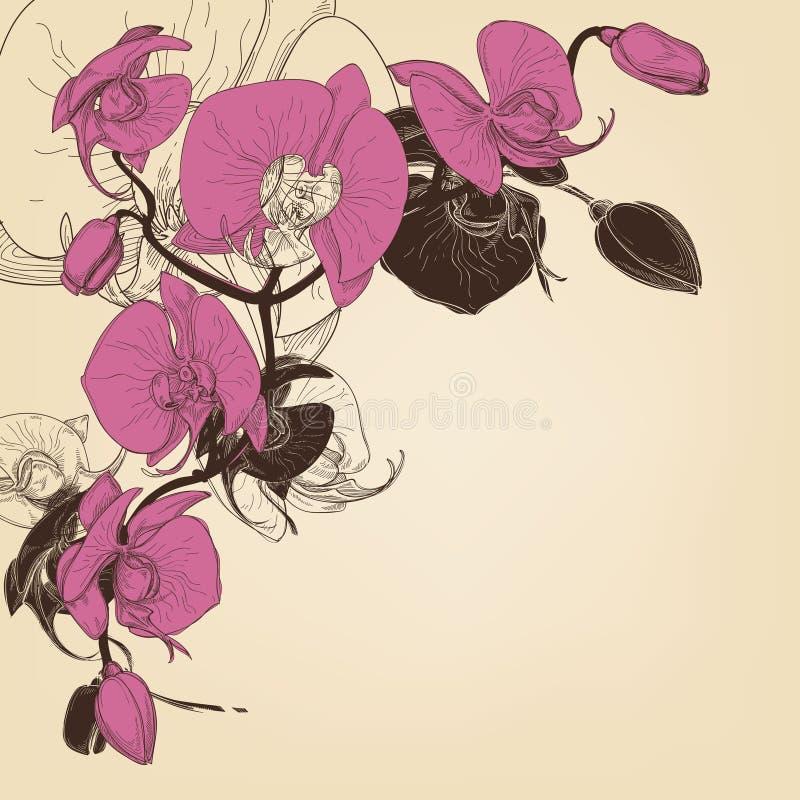 Decoración de la esquina de la orquídea libre illustration