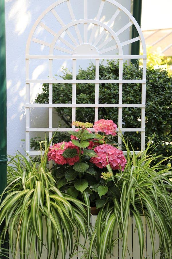 Decoración De La Flor Para La Terraza Hortensias Y Comosum