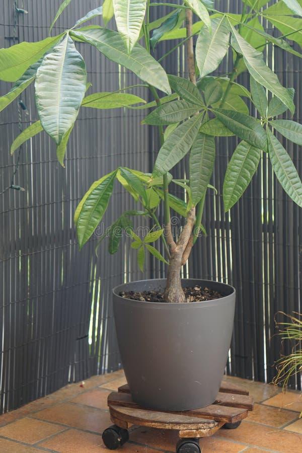 Decoración de la planta verde en tablero capaz del rollo de madera con una cerca oscura del diseño fotos de archivo libres de regalías