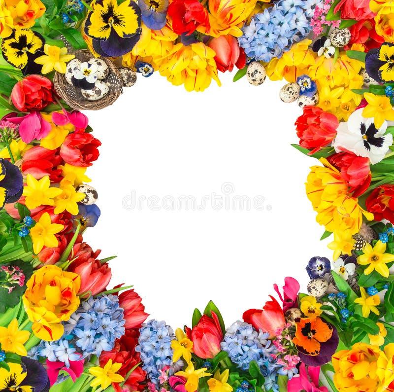 Decoración de Pascua con los huevos, tulipanes, narciso, jacinto Flor fotografía de archivo