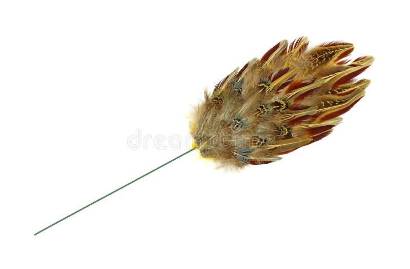 Decoración del acento del hogar de la pluma del faisán foto de archivo