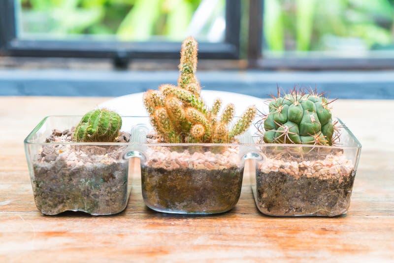 Decoración del cactus del florero foto de archivo libre de regalías