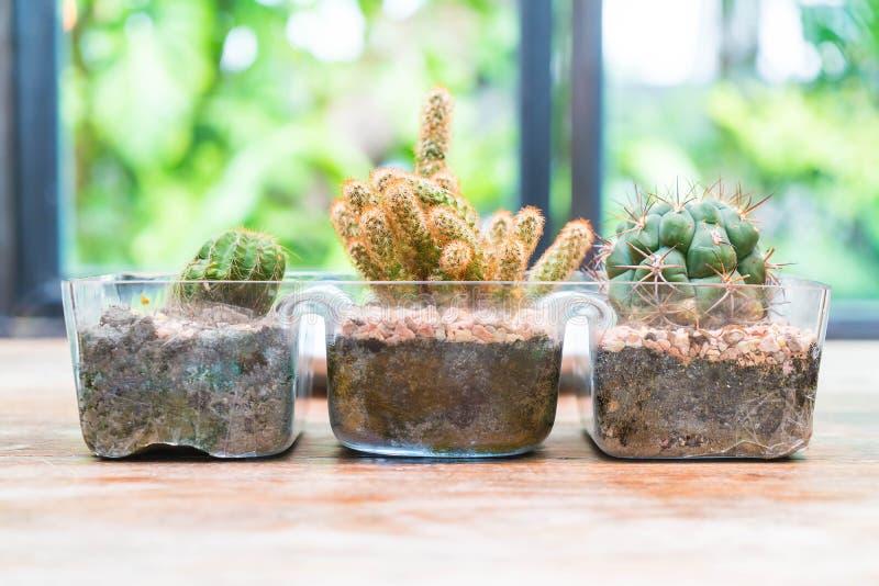 Decoración del cactus del florero imágenes de archivo libres de regalías