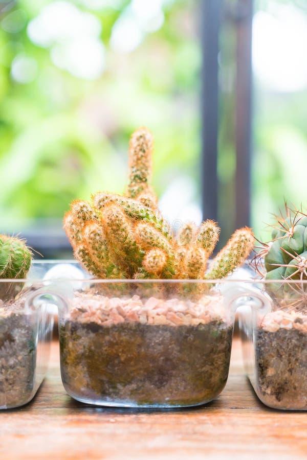 Decoración del cactus del florero imagen de archivo libre de regalías