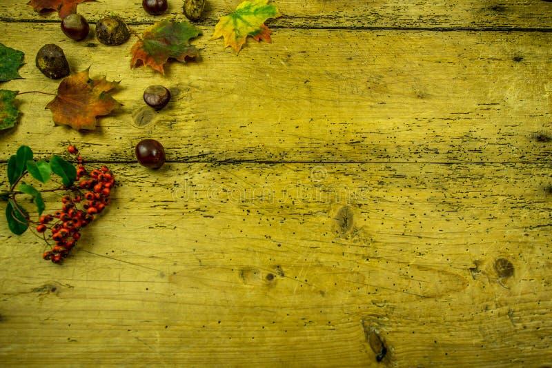 Decoración del otoño en un tablero de madera rústico imágenes de archivo libres de regalías