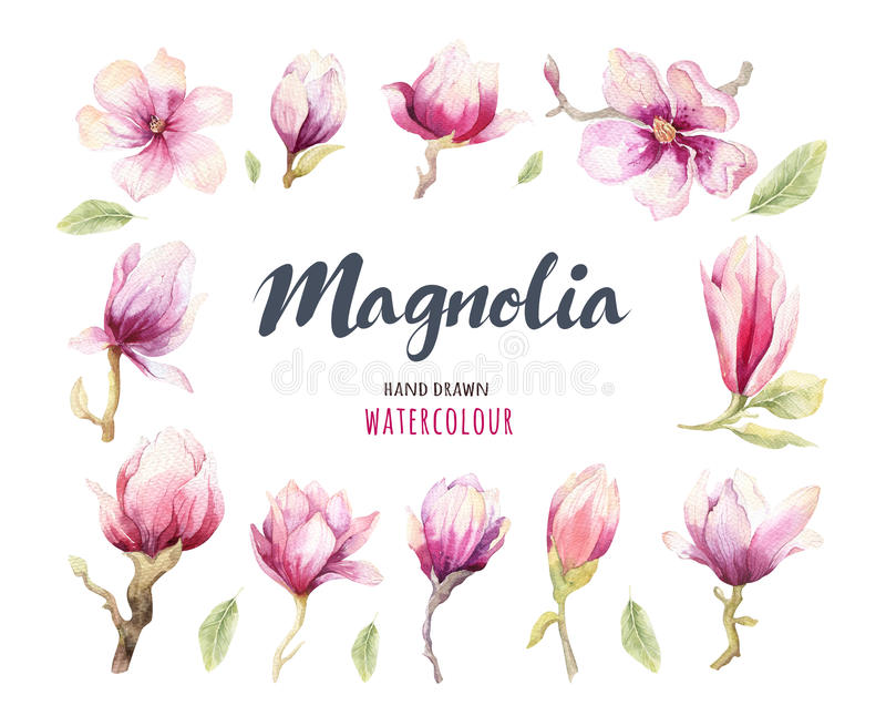 Decoración del papel pintado de la flor del flor de la magnolia de la pintura de la acuarela libre illustration