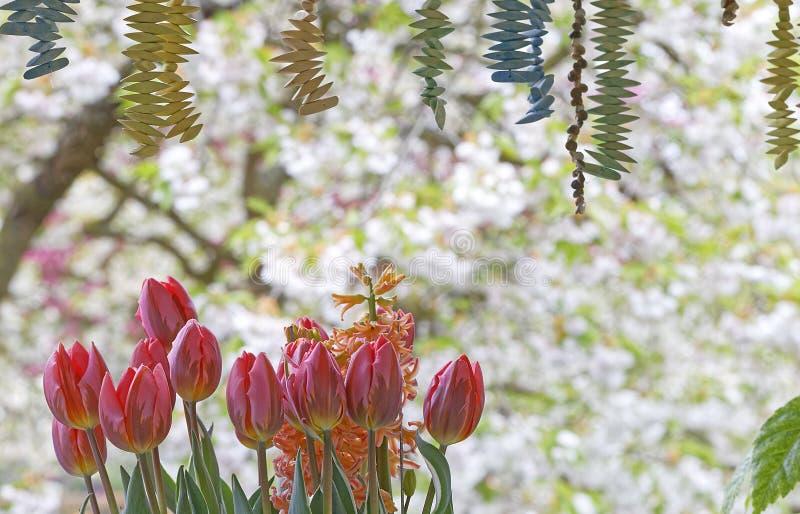 Decoración del tulipán fotos de archivo
