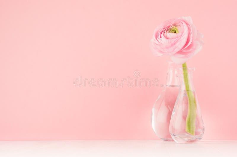 Decoración festiva para el hogar con la flor rosada del ranúnculo en el tablero de madera blanco ligero suave, diseño para la bod fotos de archivo